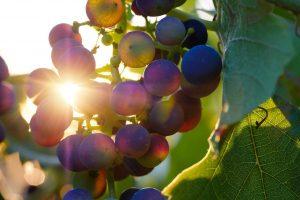 De la vigne du Seigneur au vin de l'Alliance